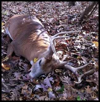 10 Point Buck Dead http://forums.bowsite.com/TF/bgforums/thread.cfm?threadid=390142&forum=4