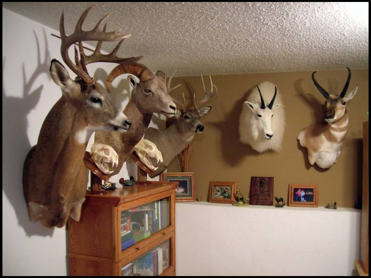 Ideas For Trophy Room Wall Material