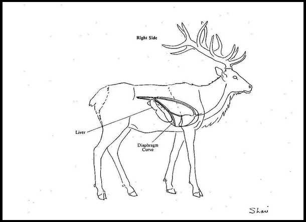 Elk Anatomy Overlays