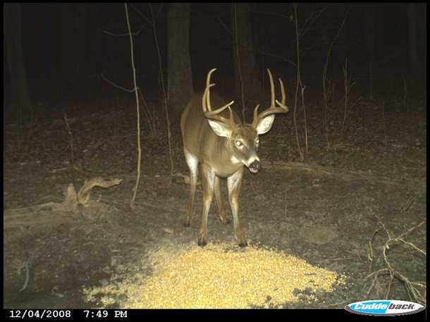 That can deer lick in hancock county ohio join. was