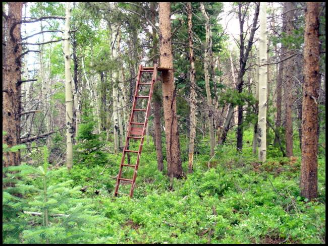Homemade tree stand ideas for Tree stand blind ideas