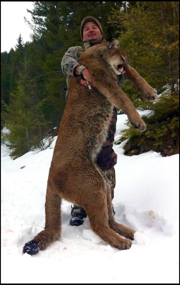 hunt valley cougar women The okanagan valley of british covert outfitting only hunts the very best dates that almost guarantee the right snow conditions to be successful on a cougar hunt.