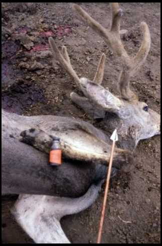 Mule Buck Call Sounds http://forums.bowsite.com/tf/bgforums/thread.cfm?forum=7&threadid=369186