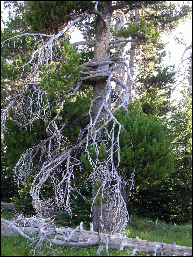 Homemade tree stand ideas for Tree stand ideas