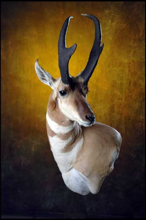 Let me see your antelope mounts...