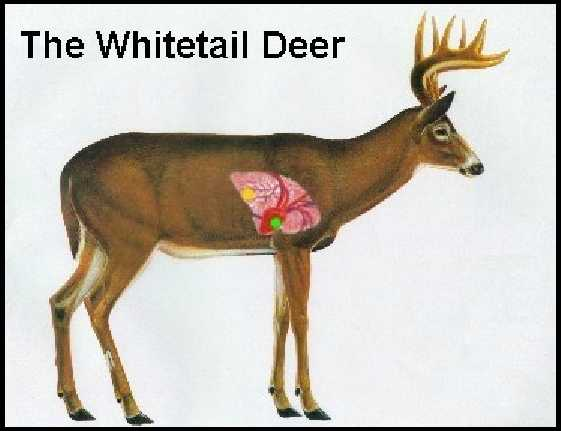 whitetail single personals Whitetail dating: browse whitetail, singles & personals matchcom brings whitetail daters together in whitetail, matchcom is the leading online dating service.