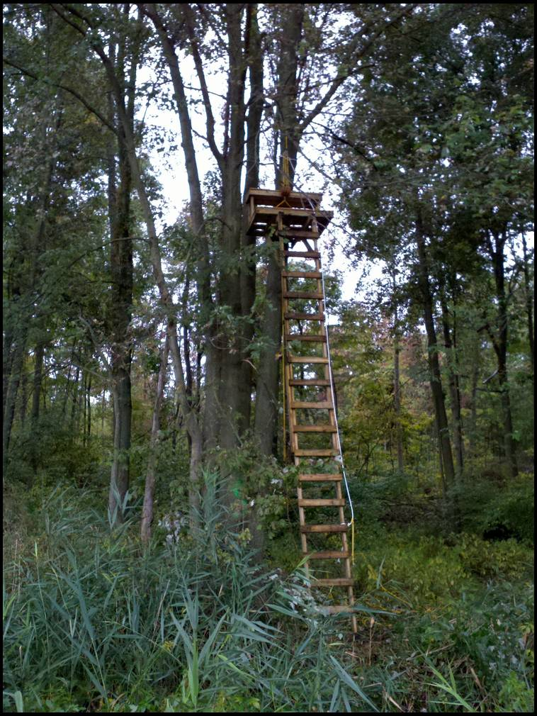 Homemade Tree Stand Ideas