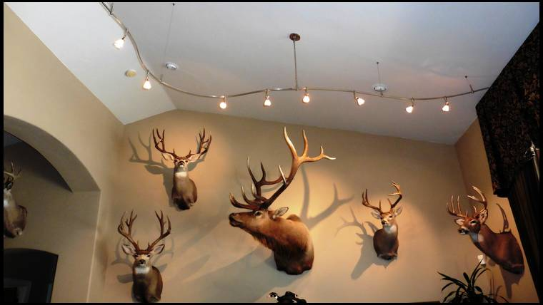 Spotlights In Trophy Rooms Yes Or No