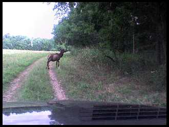Elk hunting in northeast ok for Oklahoma lifetime hunting and fishing license