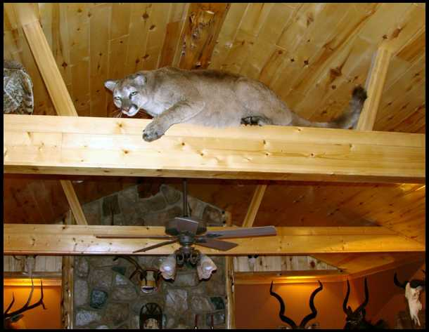 The Rafter Cat