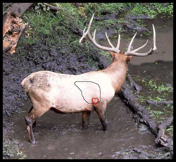 Elk Kill Shot Diagram Library Of Wiring Diagram