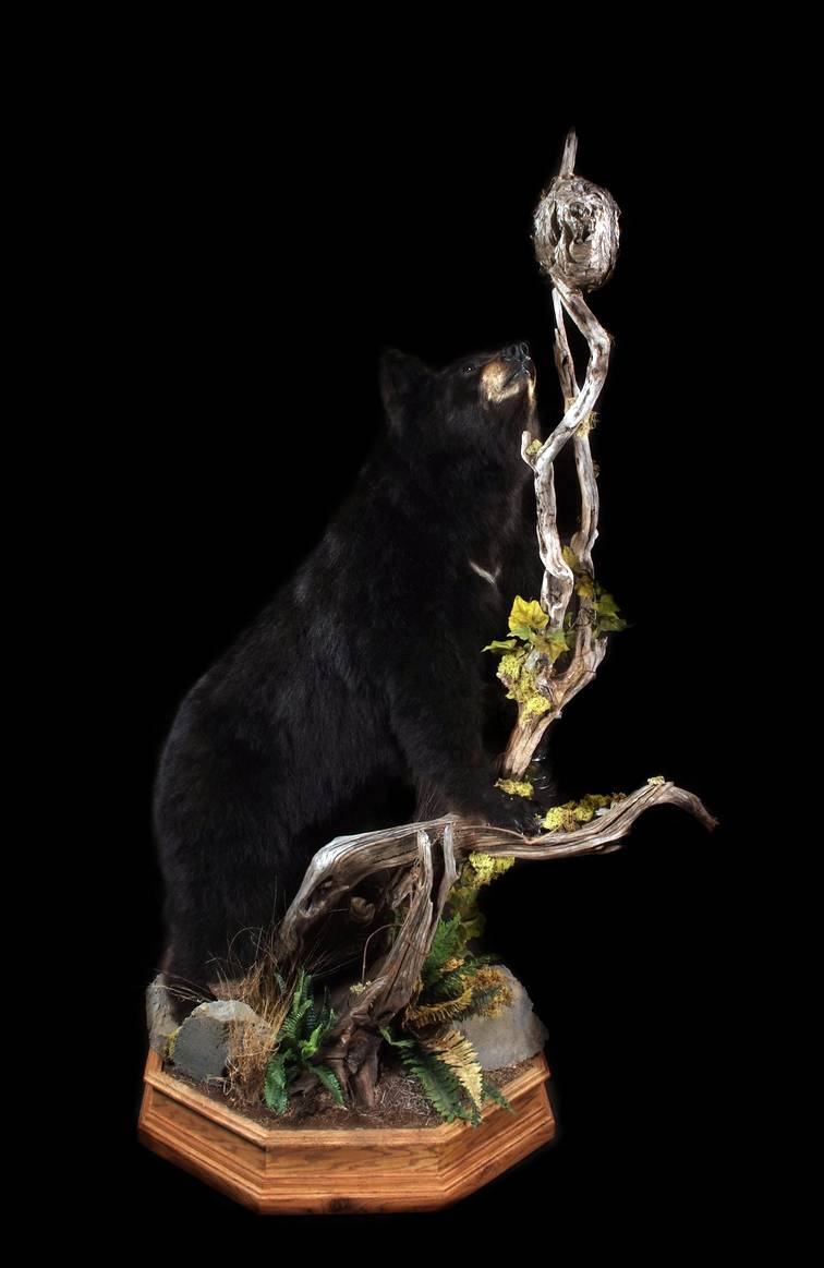 Show Me Your Black Bear Mounts
