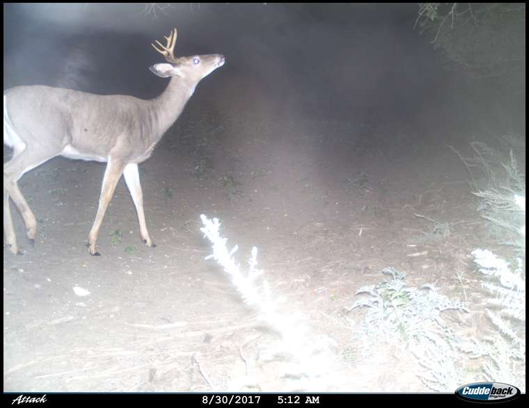sdbowhunter's embedded Photo
