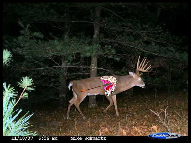 Whitetail Deer Vitals Diagram Shot Placement Electrical Drawing