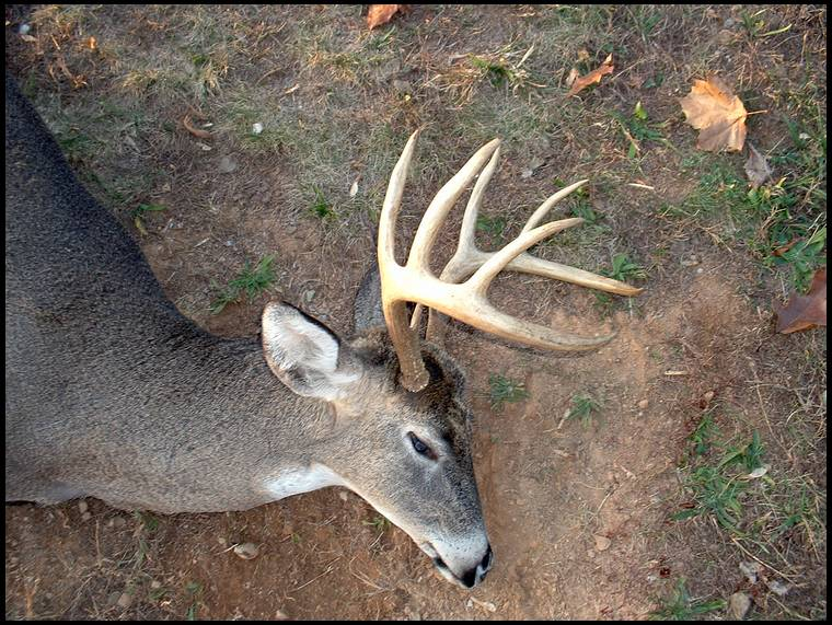 Big Bucks Killed In Virginia http://forums.bowsite.com/tf/regional/thread.cfm?threadid=203628&state=WV