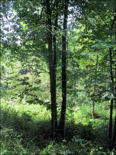 what is the ideal height of a treestand?
